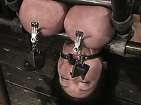 Claire Dames gets her humongous tits mercilessly used in upside down suspension