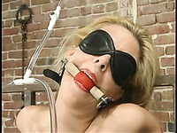 Blindfolded sub blonde Heaven Lee gets tied to a metal frame and tortured