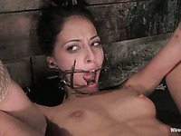 Leggy perky titted slave girl Veronica Jett gets her tight asshole punished by dom Princess Donna