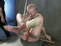 Cute babe Daisy Sparks with a shaved head is a true BDSm slave in bondage and getting violated