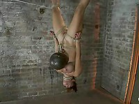 Slutty Baylee Lee manages to suck a white dick while hanging upside down like a whore.