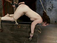 Hogtied chick Serena Blair enjoys sucking a fat dick and having her wet holes stimulated with toys.